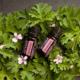 geranium-oil